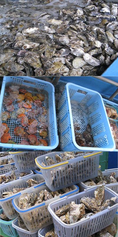 牡蠣や緋扇貝